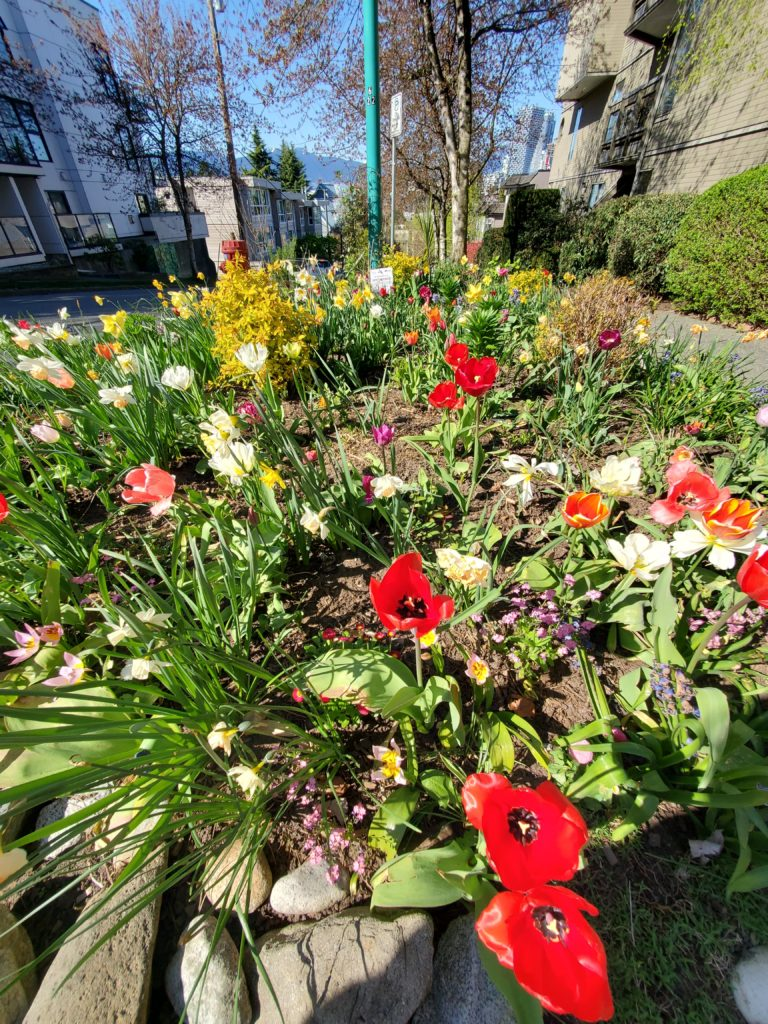 A variety of red, white, pink and yellow flowers in a community-maintained garden on a street with low-rise apartments nearby.